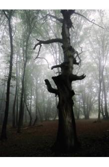 Fetele pădurii